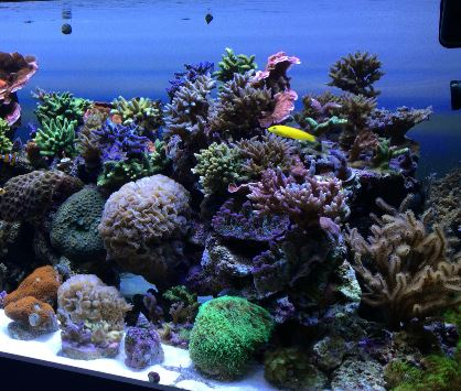 Acropora Reef Aquarium with LED Lights, AquaRay NP 1500, 2000, purchase lighting